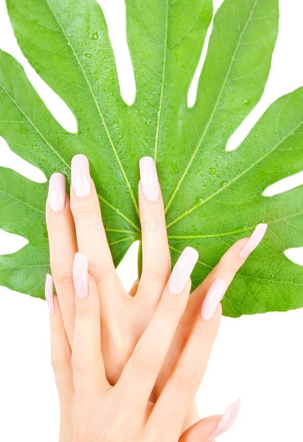 Weibliche Hände mit grünem Blatt stockbild