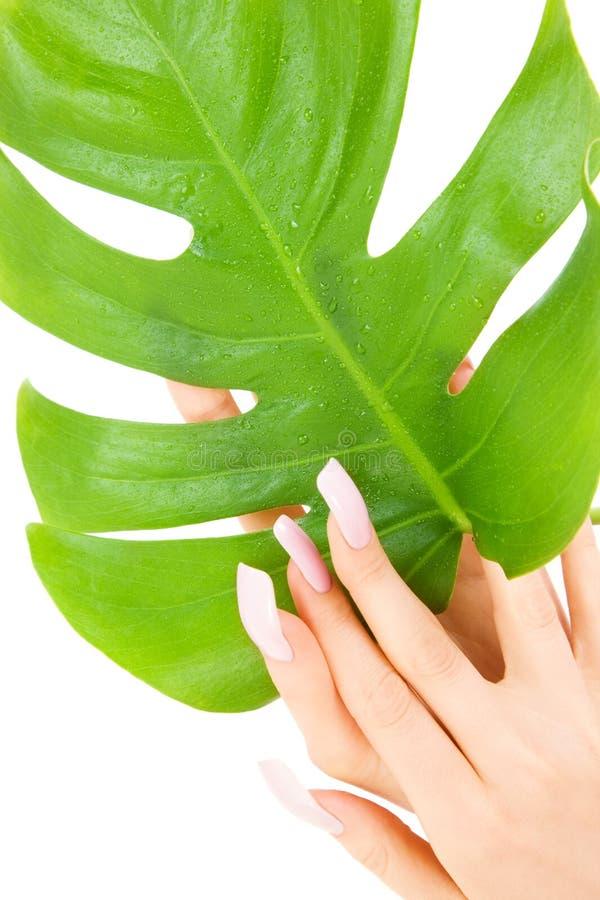 Weibliche Hände mit grünem Blatt stockfotografie