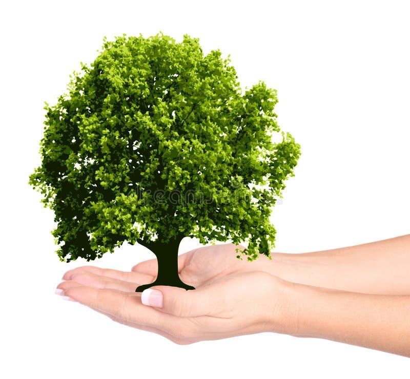 Weibliche Hände und Baum stockbild