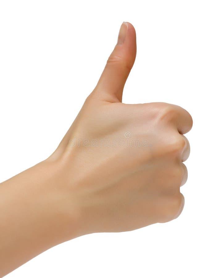 Weibliche Hand stockfoto