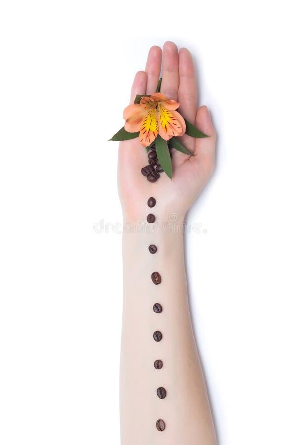 Weibliche Hand auf einem weißen Hintergrund mit Kaffeebohnen und orange Hibiscusblumen, Kunstelement, Dekoration, Hintergrund, Ar stockbilder