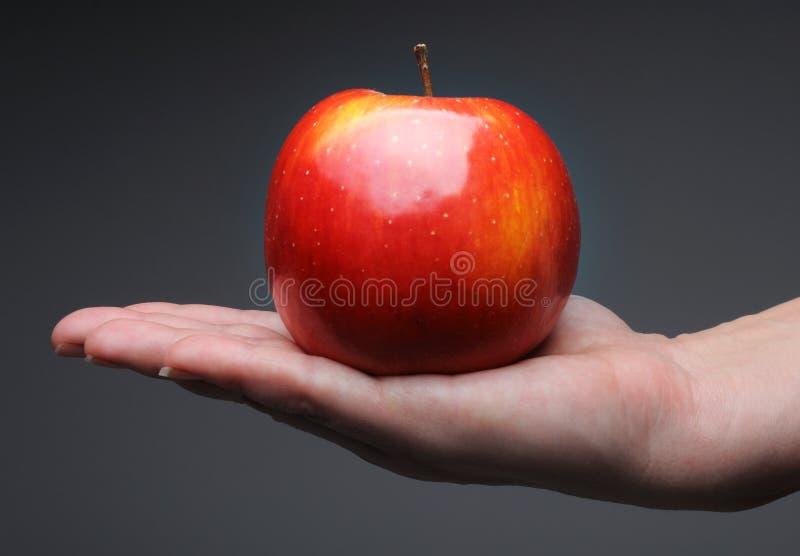 Weibliche Hand in der Nahaufnahme, die roten Apfel hält lizenzfreie stockfotografie