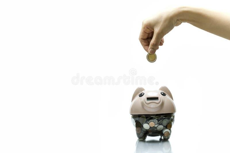 Weibliche Hand, die eine Münze in das Sparschwein lokalisiert im weißen Hintergrund setzt lizenzfreie stockbilder