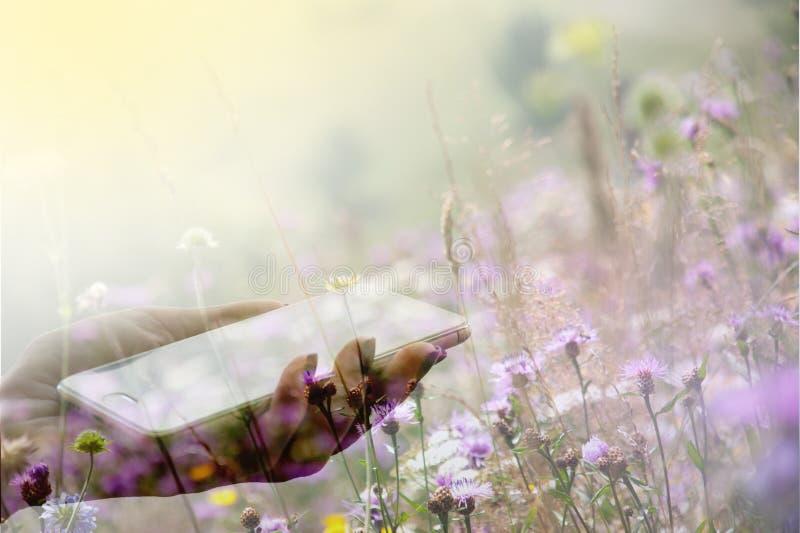 Weibliche Hand, die einen Smartphone vor dem hintergrund einer blühenden Wiese hält stockfotos