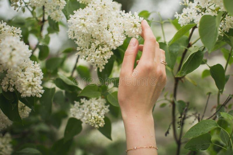 Weibliche Hand hält lila Blumen stockbild