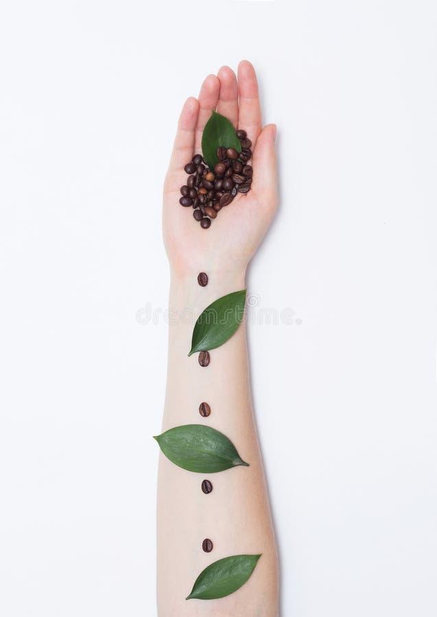 Weibliche Hand mit Kaffeebohnen in der Palme und in den Blumenblättern auf einem weißen Hintergrund, moderne handgemachte Kunst,  stockfotografie