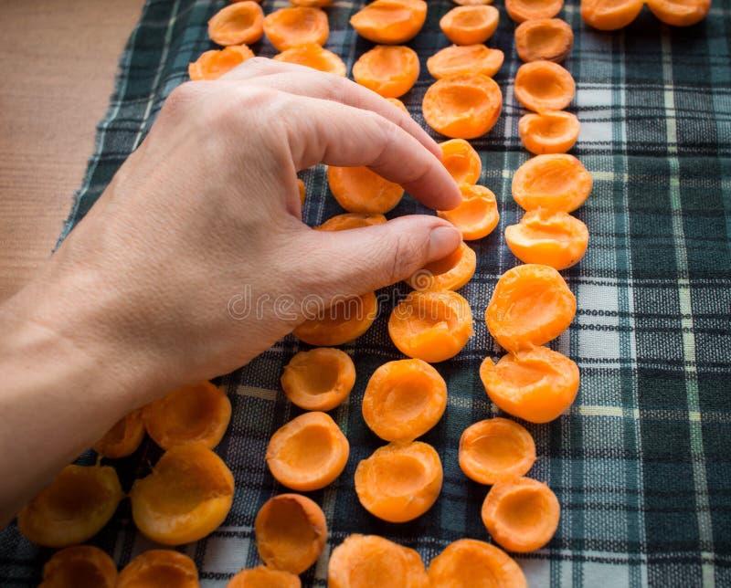 Weibliche Hand, welche die Aprikosen sich vorbereiten für Sonnentrockner für conser hält lizenzfreie stockfotos