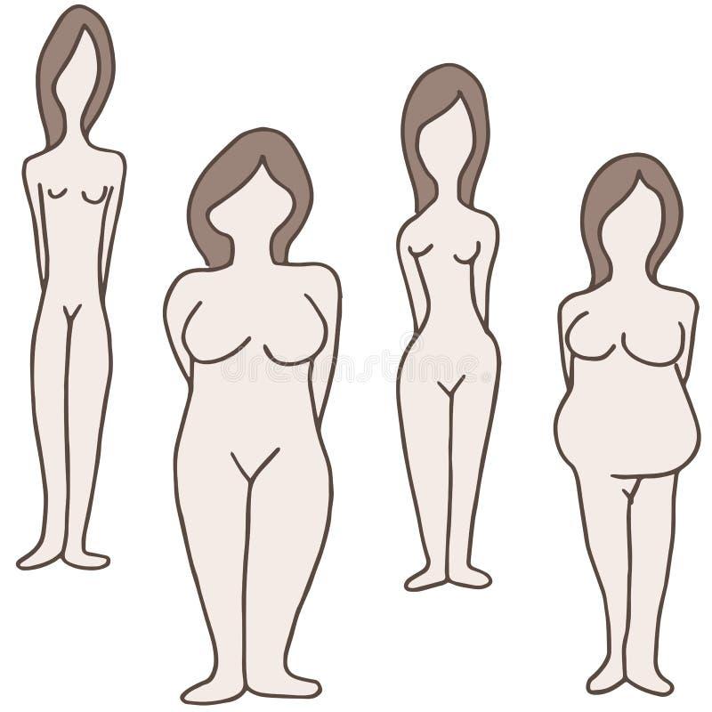 Weibliche Körperbauten lizenzfreie abbildung
