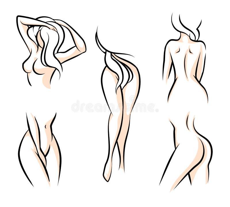 Groß Weibliches Menschliche Körperteile Diagramm Bilder ...