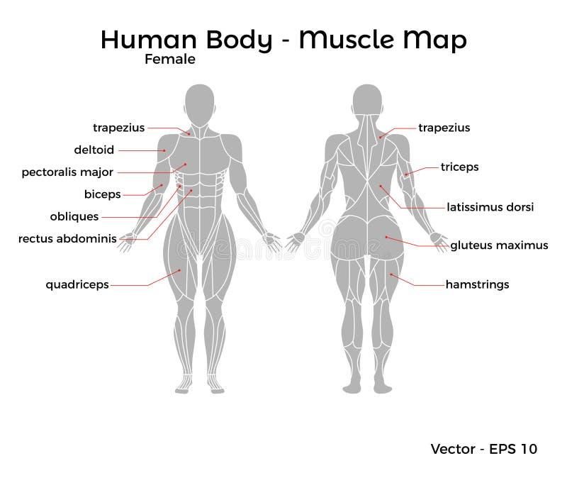 Fantastisch Diagramm Des Menschlichen Körpers Weiblichen Ideen ...