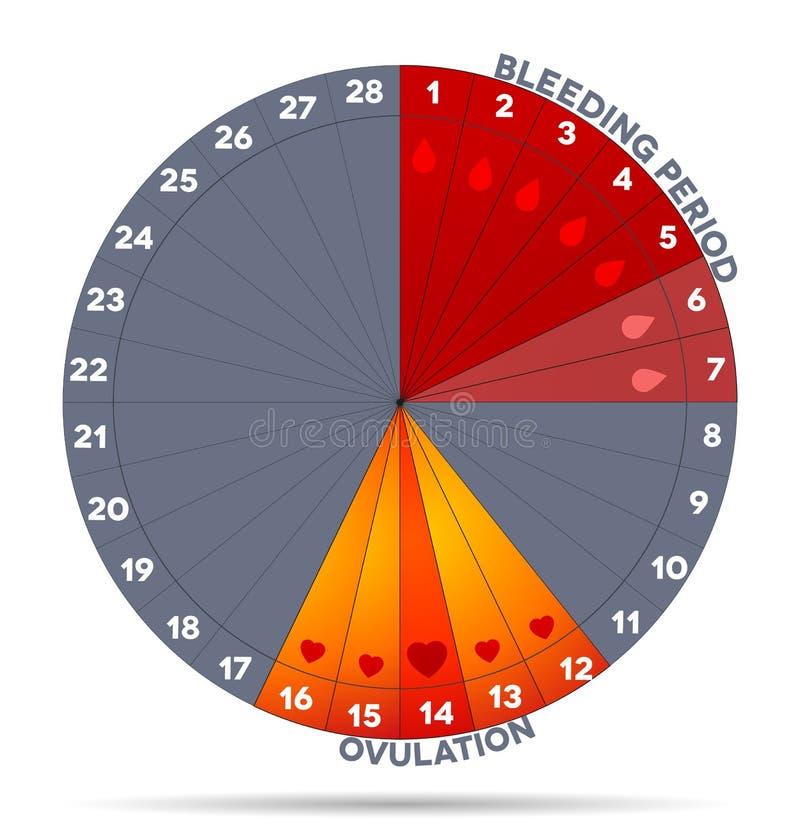Weibliche Menstruationszyklusgraphik lizenzfreie abbildung