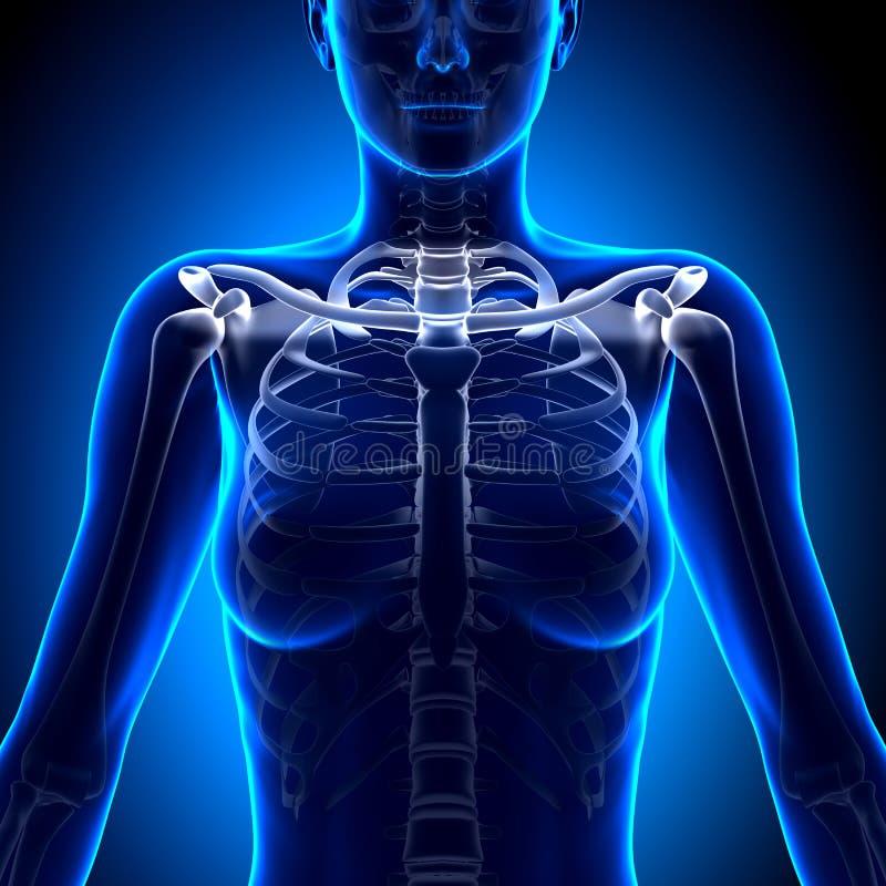 Atemberaubend Anatomie Und Physiologie Knochen Test Zeitgenössisch ...