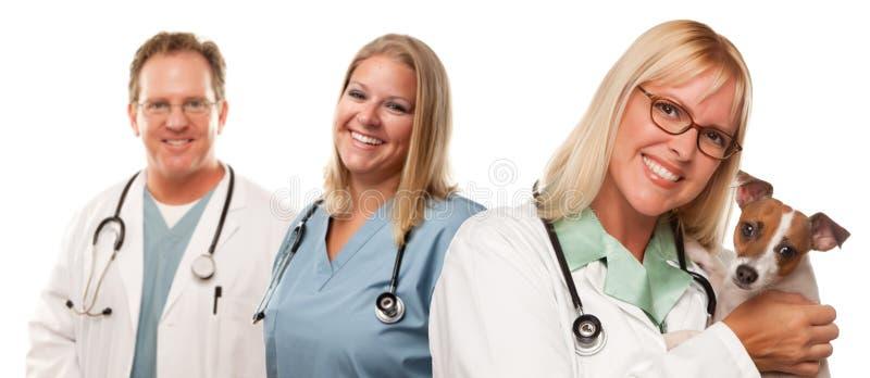 Weibliche tierärztliche Doktoren mit kleinem Welpen lizenzfreie stockfotos