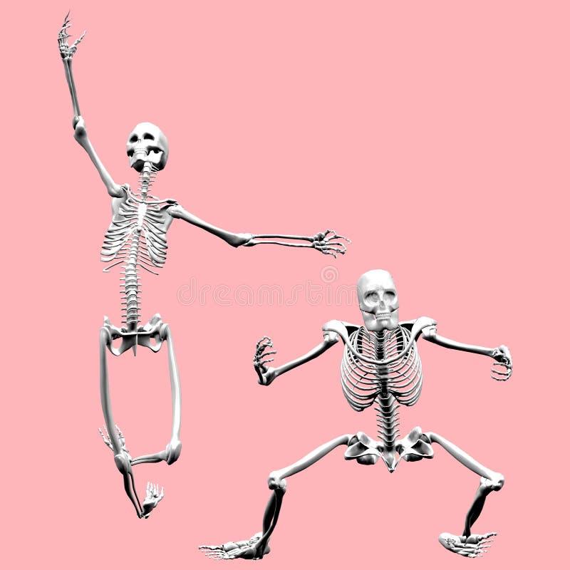 Weibliche und männliche Skelette vektor abbildung