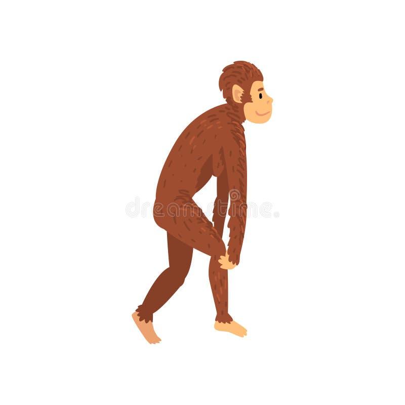 Weiblicher Australopithecus, Biologie-menschliche Entwicklungs-Stadium, Evolutionsprozess der Frauen-Vektor-Illustration stock abbildung