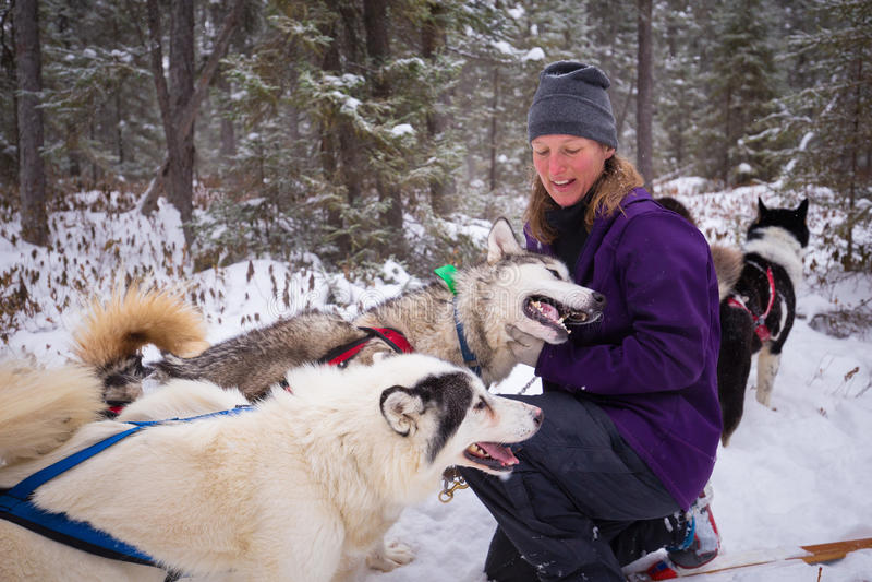 Weiblicher Führer und ihr Team von Inuit-Schlitten-Hunden im Schnee-Winter-Holz stockfotos