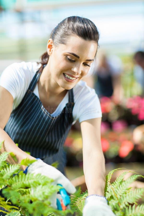 Weiblicher Gärtner lizenzfreie stockfotos