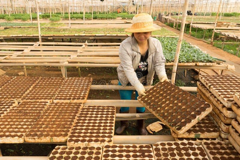 Weiblicher Gärtner, der im Garten arbeitet lizenzfreie stockbilder