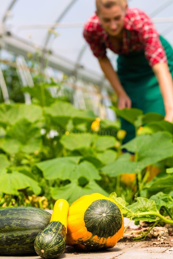 Weiblicher Gärtner im Gartenbaubetrieb oder in der Kindertagesstätte lizenzfreie stockfotografie