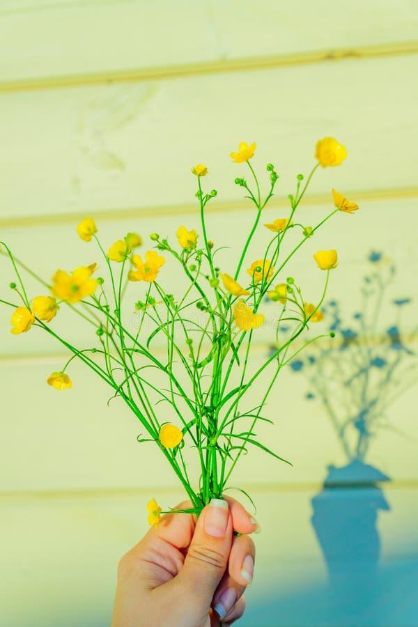 Weiblicher Handholdingblumenstrauß von schönen gelben wilden Butterblumeblumen im Sonnenunterganglicht lizenzfreie stockbilder