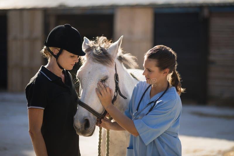 Weiblicher Jockey, der den Tierarzt streicht Pferd betrachtet stockfoto