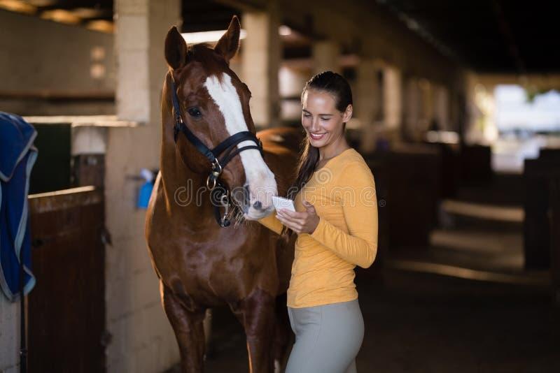 Weiblicher Jockey, der intelligentes Telefon beim Bereitstehen des Pferds verwendet lizenzfreie stockfotografie