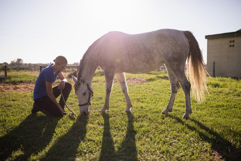 Weiblicher Jockey, der Pferd beim Knien auf grasartigem Feld betrachtet stockfoto
