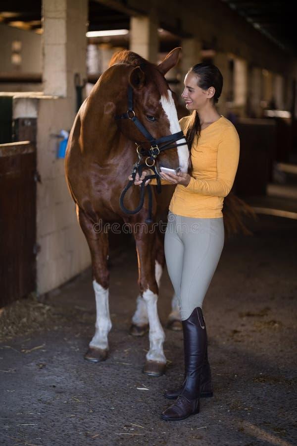 weiblicher Jockey mit dem Pferd, das im Stall steht lizenzfreies stockfoto