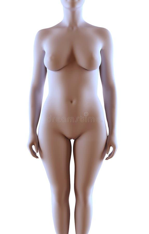 Weiblicher Körper lizenzfreie abbildung