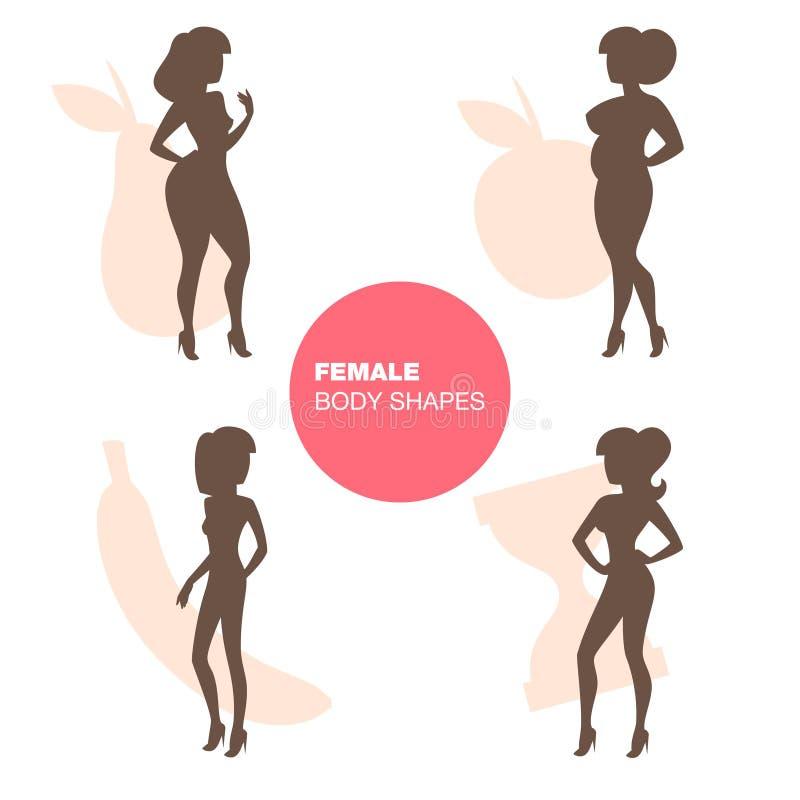 Weiblicher Körper-Formen vektor abbildung. Illustration von frau ...
