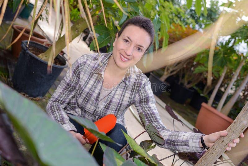 Weiblicher lächelnder Gärtner, während die Untersuchung am Gewächshaus verlässt lizenzfreies stockfoto