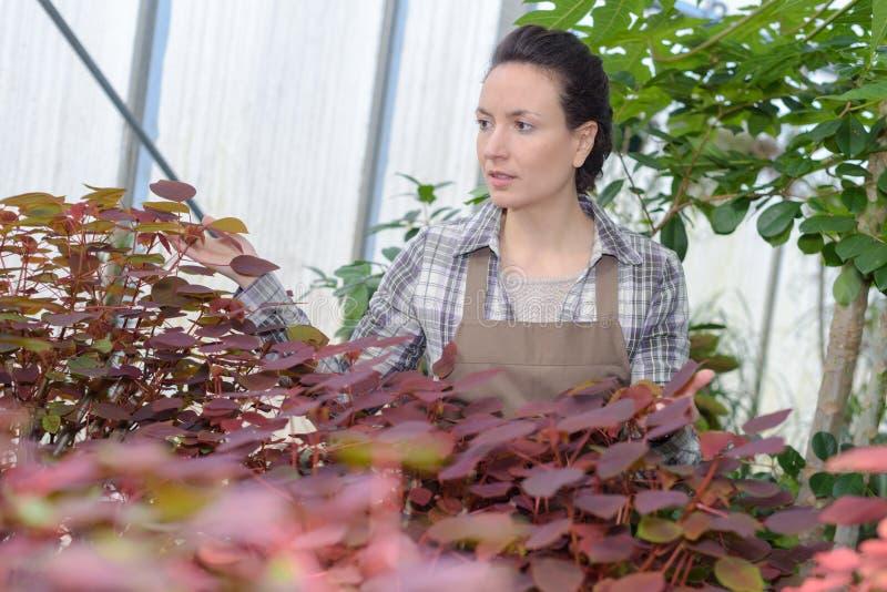 Weiblicher lächelnder Gärtner, während die Untersuchung am Gewächshaus verlässt lizenzfreies stockbild