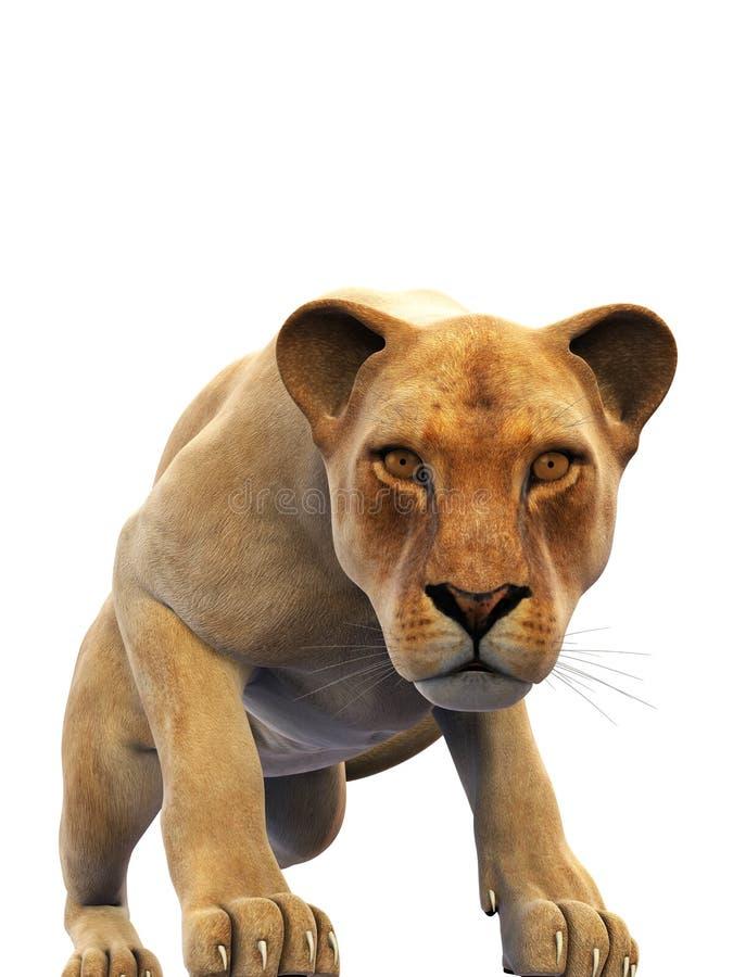 Weiblicher Löwe, Löwin, wildes Tier lokalisiert auf Weiß stock abbildung
