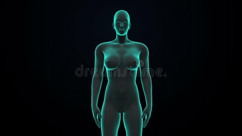 Weiblicher Menschlicher Körper, Der Lymphsystem Scannt Blaues ...