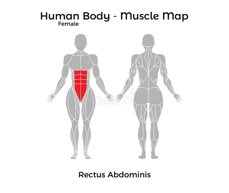 Schön Der Menschliche Körper Organe Diagramm Zeitgenössisch ...