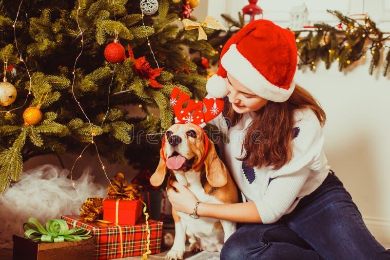 Weiblicher Spürhundhund mit Jugendlichen unter dem Weihnachtsbaum lizenzfreie stockfotografie