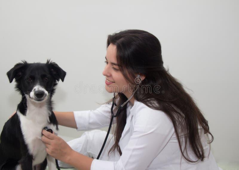 Weiblicher Tierarzt, der einen Hund mit Stethoskop überprüft lizenzfreies stockbild