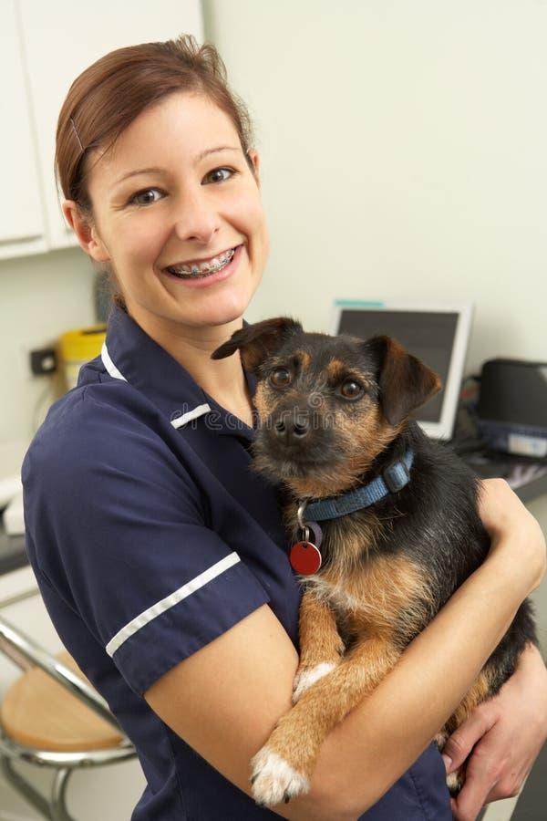 Weiblicher Tierarzt-Holding-Hund in der Chirurgie lizenzfreies stockfoto