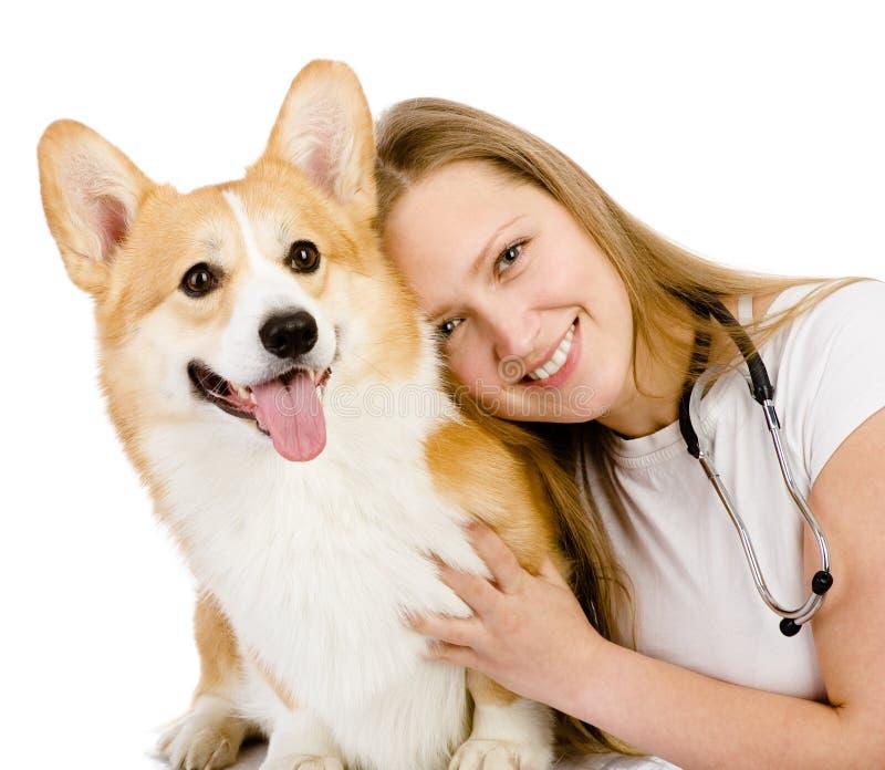 Weiblicher Tierarzt und Pembroke Welsh Corgi-Hund. stockfotos