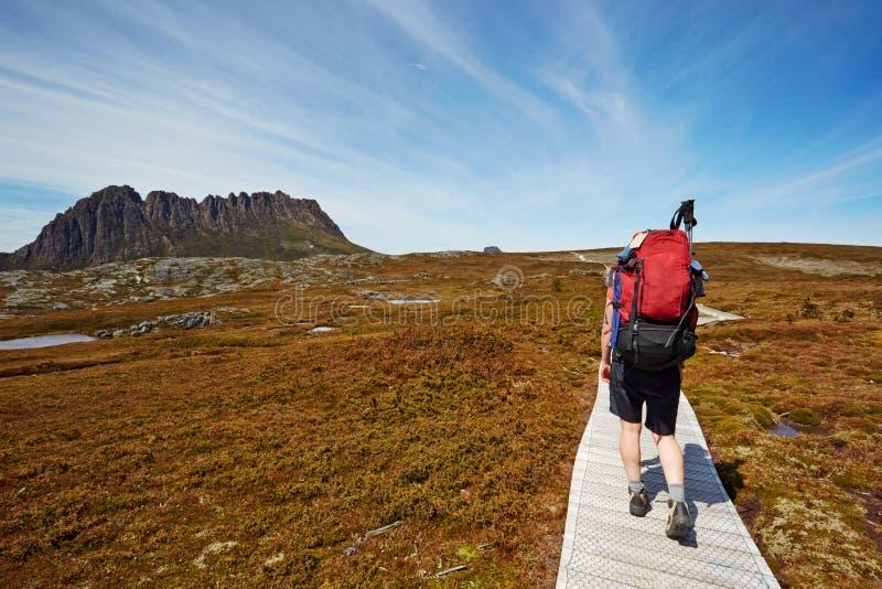 Weiblicher Wanderer auf der Überlandspur, Wiegen-Berg, Tasmanien lizenzfreie stockbilder