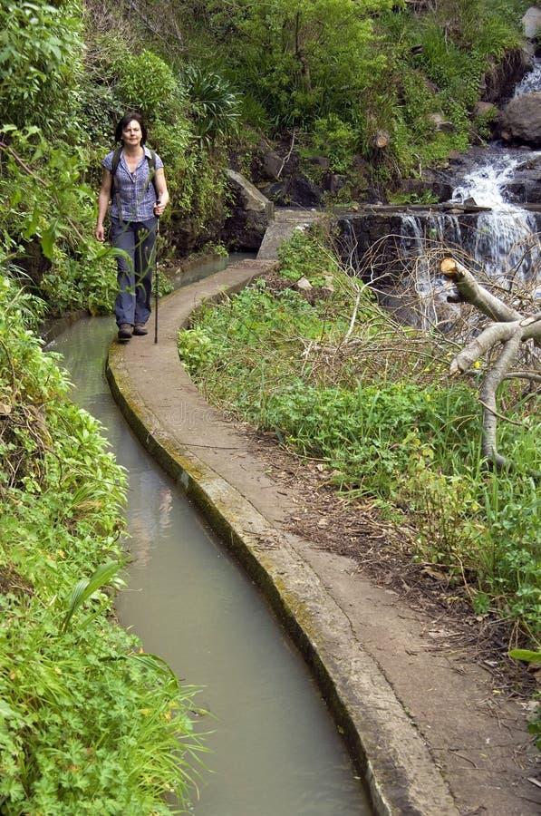 Weiblicher Wanderer, der entlang levada auf Madeira-Insel geht lizenzfreie stockbilder