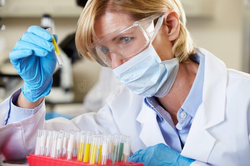 Weiblicher Wissenschaftler, der Reagenzglas im Labor studiert lizenzfreie stockbilder