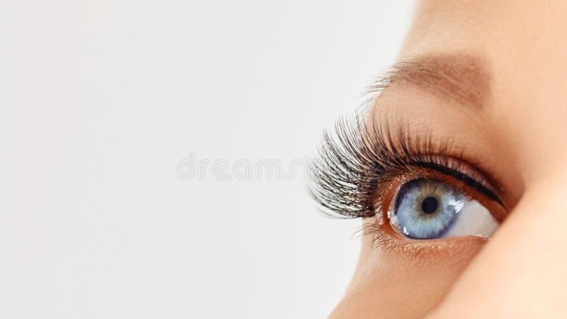 Weibliches Auge mit extremen langen Peitschen des falschen Auges Wimpererweiterungen, Make-up, Kosmetik, Sch?nheit stockfotografie