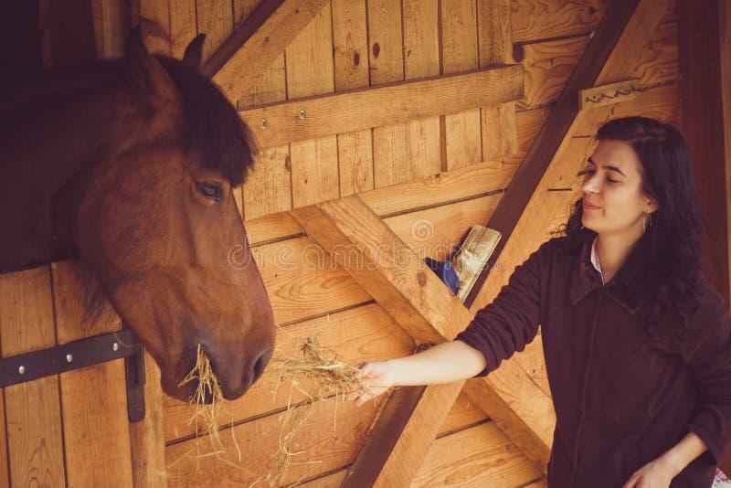 Weibliches Fütterungspferd lizenzfreie stockfotos