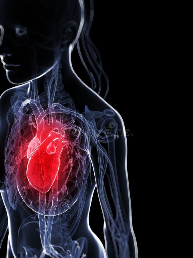 Weibliches Herz lizenzfreie abbildung