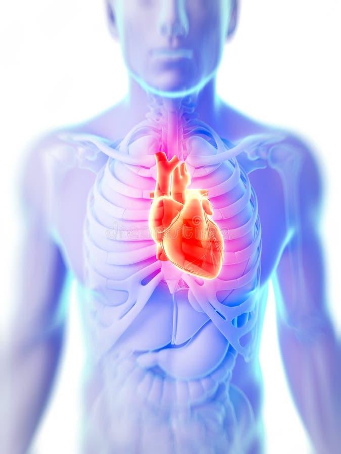 Weibliches Herz stock abbildung