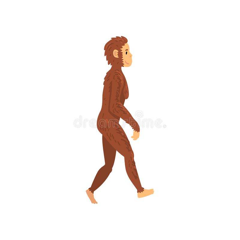 Weibliches Homo erectus, Biologie-menschliche Entwicklungs-Stadium, Evolutionsprozess der Frauen-Vektor-Illustration lizenzfreie abbildung