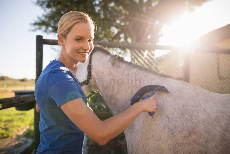Weibliches Jockeyreinigungspferd mit Schweissschaber an der Scheune lizenzfreie stockbilder