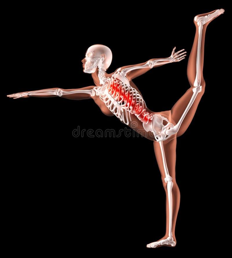 Weibliches Skelett in Yogastellung vektor abbildung