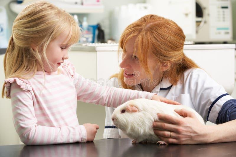 Weibliches Tierarzt-überprüfenmeerschweinchen stockfotografie